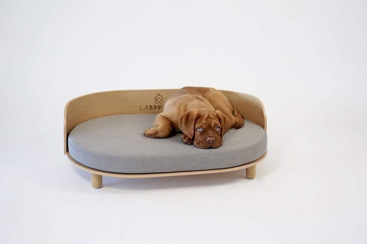 Dog on designer dog bed