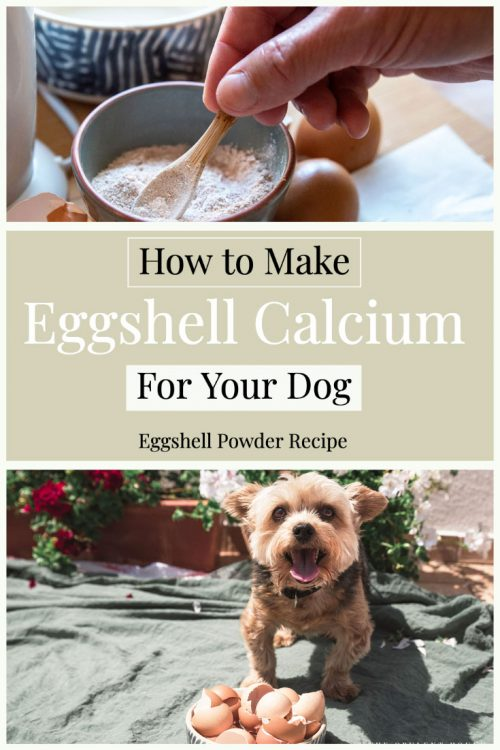How to make eggshell poweder for your dogs | Eggshell calcium