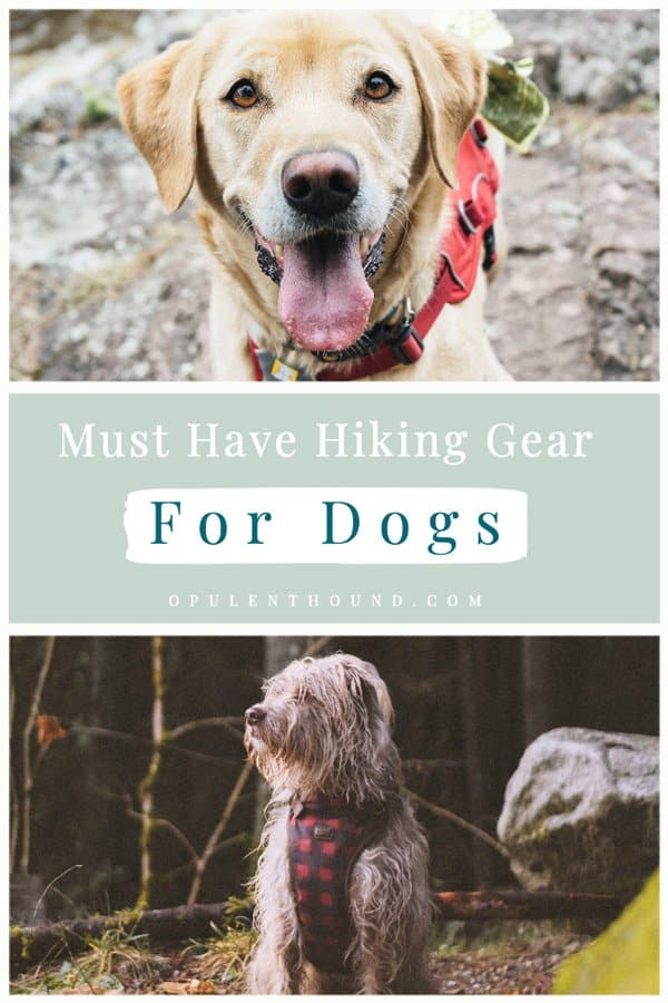 Pinterest collage image of dogs hiking in the woods with text overlay - Must have hiking gear for dogs