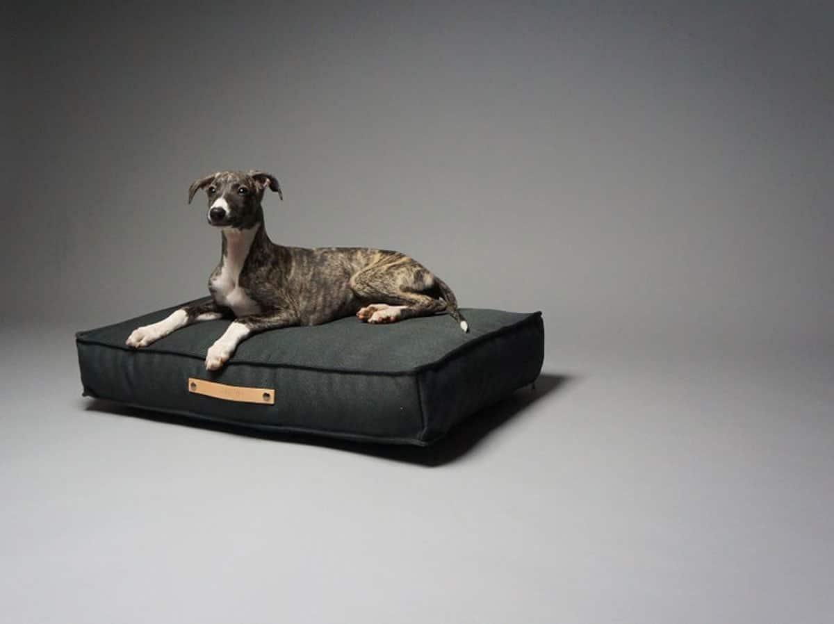Product shot of wippet dog sitting on a stylish cushion dog bed