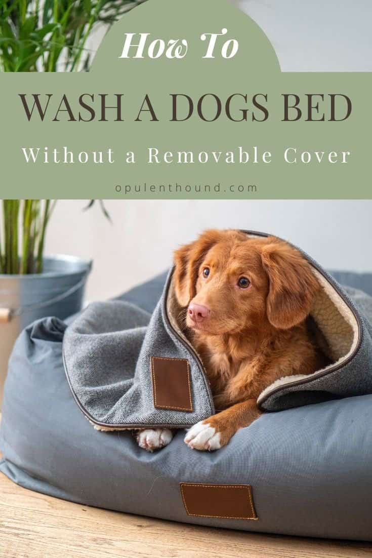 Pinterest image of a small dog in a blue bed with a blanket with text overlay - How to wash a dogs bed without a removable cover