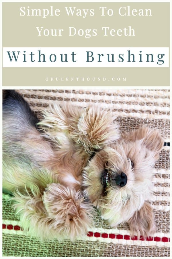 Pinable image of a cute Yorkshire Terrier lying on it's back with text overlay - Simple ways to clean your dogs teeth without brushing