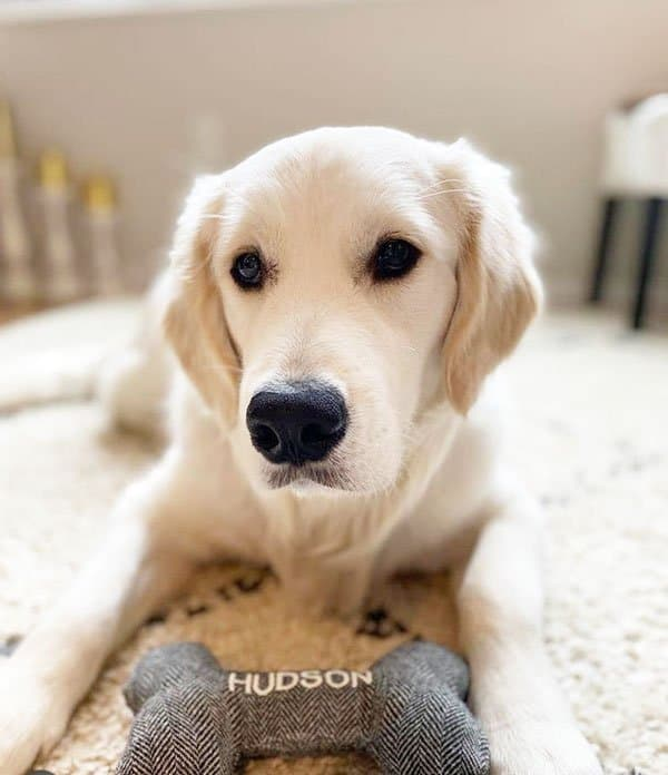 White dog on the floor with a personalised dog bone toy