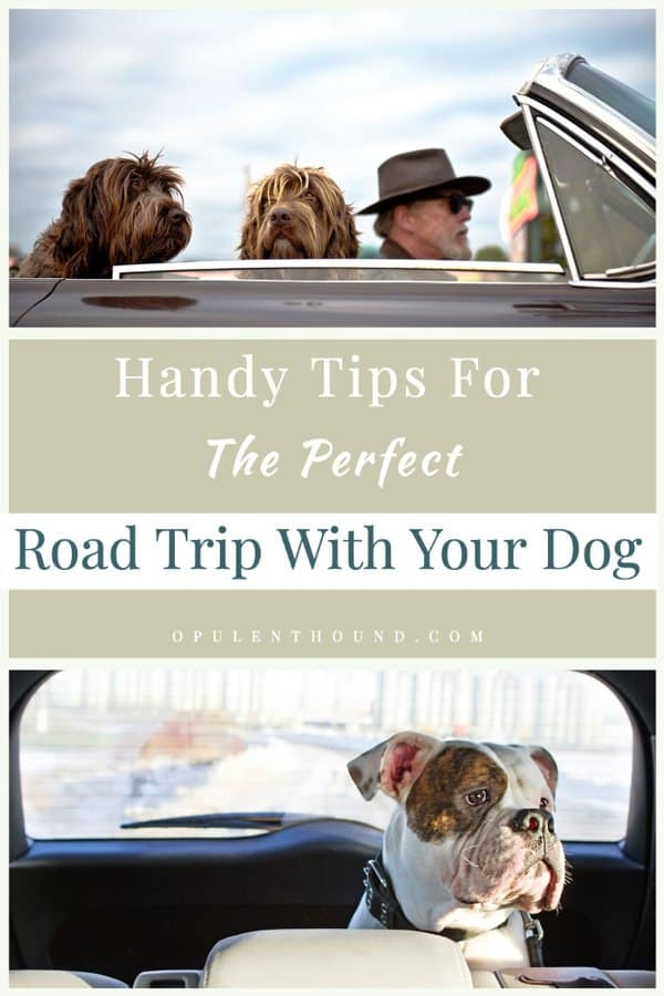 Pinnable collage of images of dogs in cars with text overlay - Handy tips for the perfect road trip with your dog.