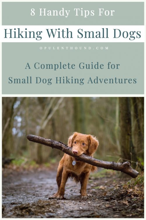 Pinterest image of a small dog on a trail carrying a large stick with text overlay - tips for hiking with small dogs.
